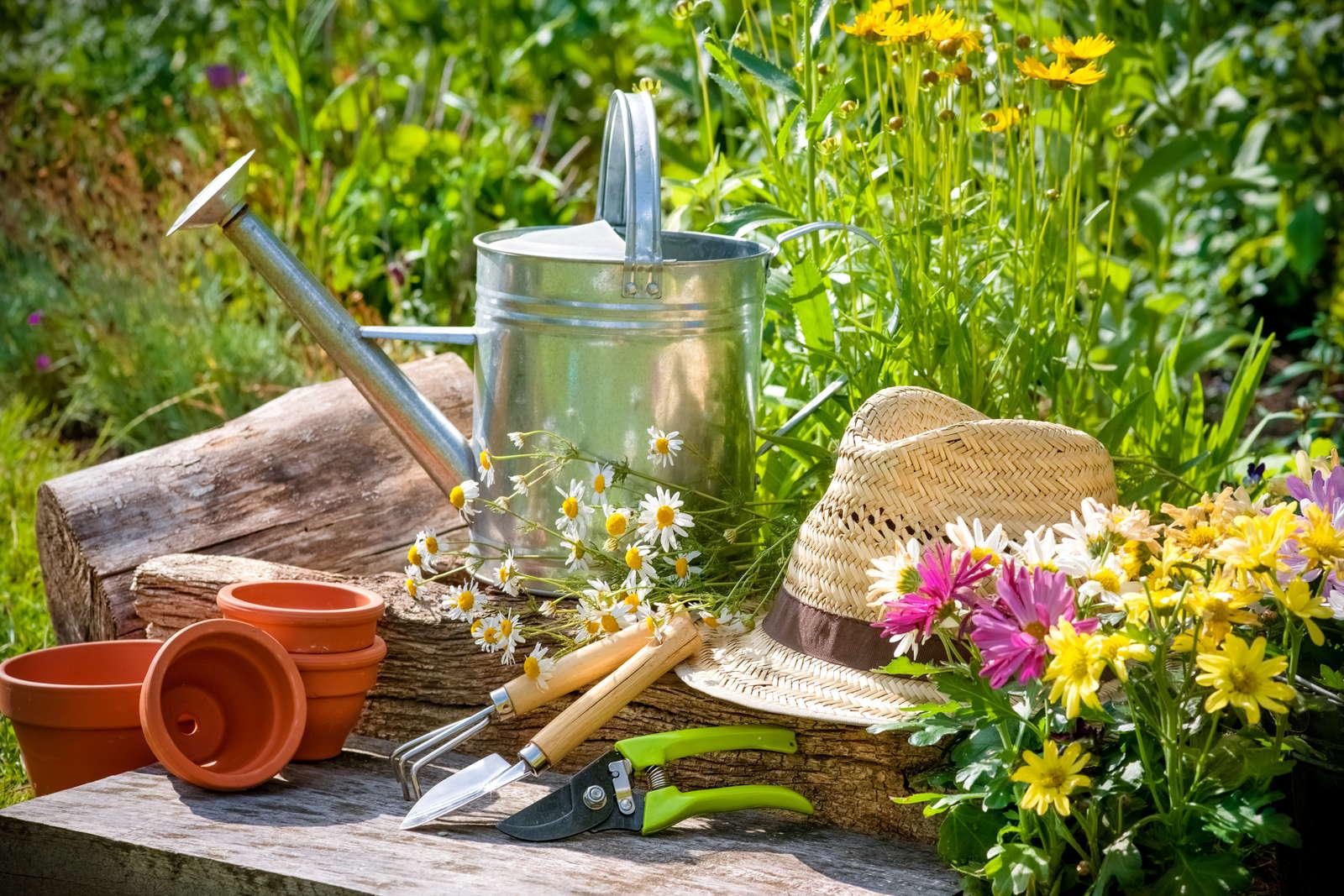 Pflegeleichte Blumen: Die Top 7 für den Garten - Plantura