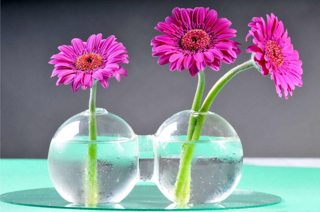Gerbera in Vase