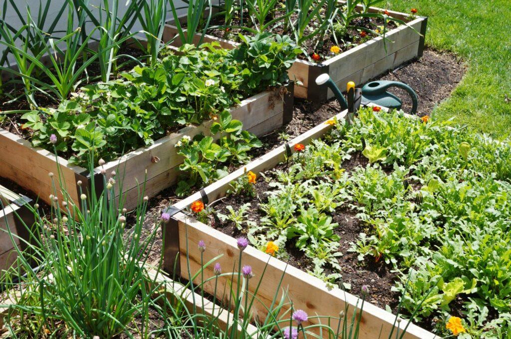 Hochbeete im Garten bepflanzen Gemüse Kräuter