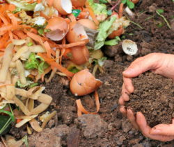 Kompost Essensreste Hände Mit Kompost