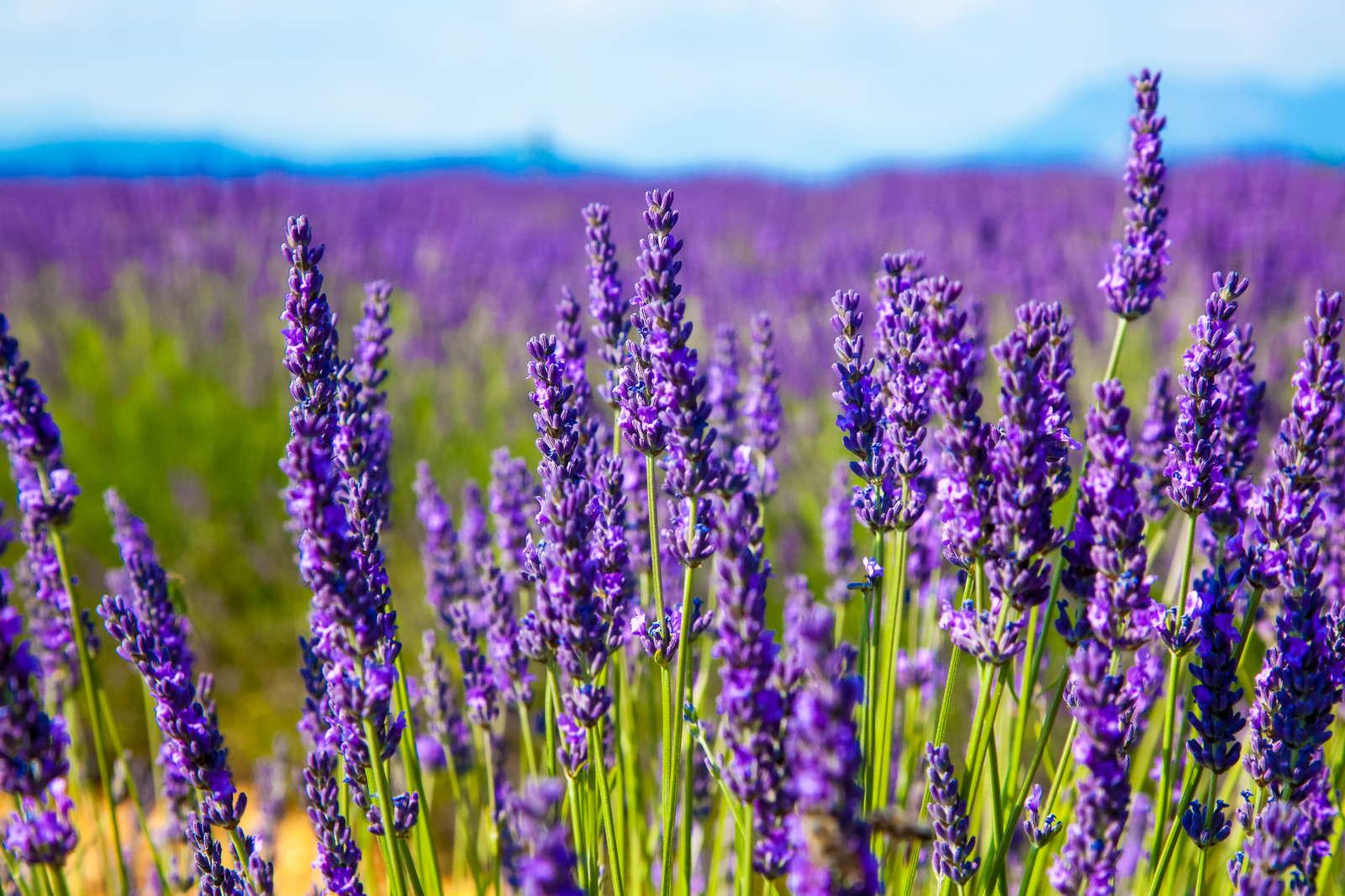 Pflegeleichte Blumen Die Top 7 Für Den Garten Plantura