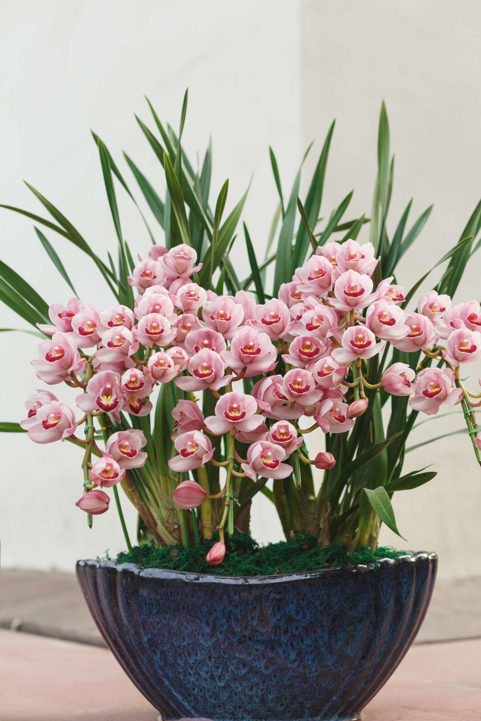 orchideen experten tipps zu kauf standort pflege. Black Bedroom Furniture Sets. Home Design Ideas