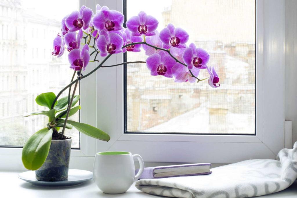 Orchideen Fensterbank Tasse Buch