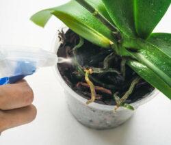 Orchideen Besprühen Mit Sprühflasche Orchidee Bewässern