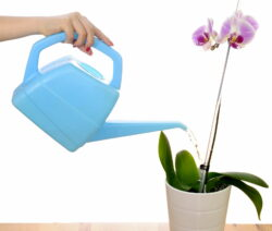 Orchideen Gießen Blaue Gießkanne