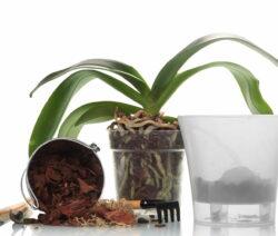 Orchideen Umtopfen Erde Transparenter Topf