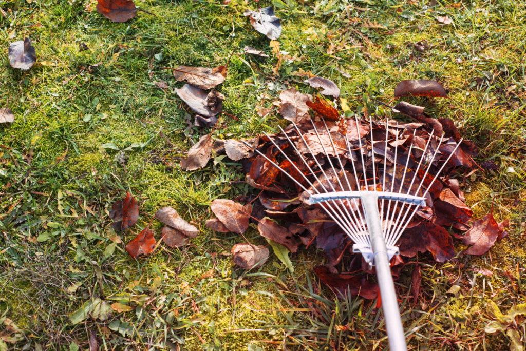 Rasen mit Laub und Rechen