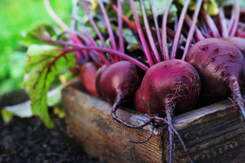 Rote beete in Holzkiste