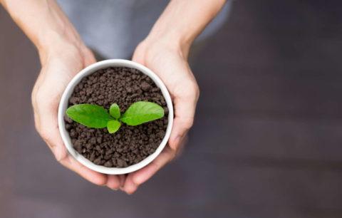 10 Pflanzen, Die Man Leicht Durch Stecklinge Vermehren Kann