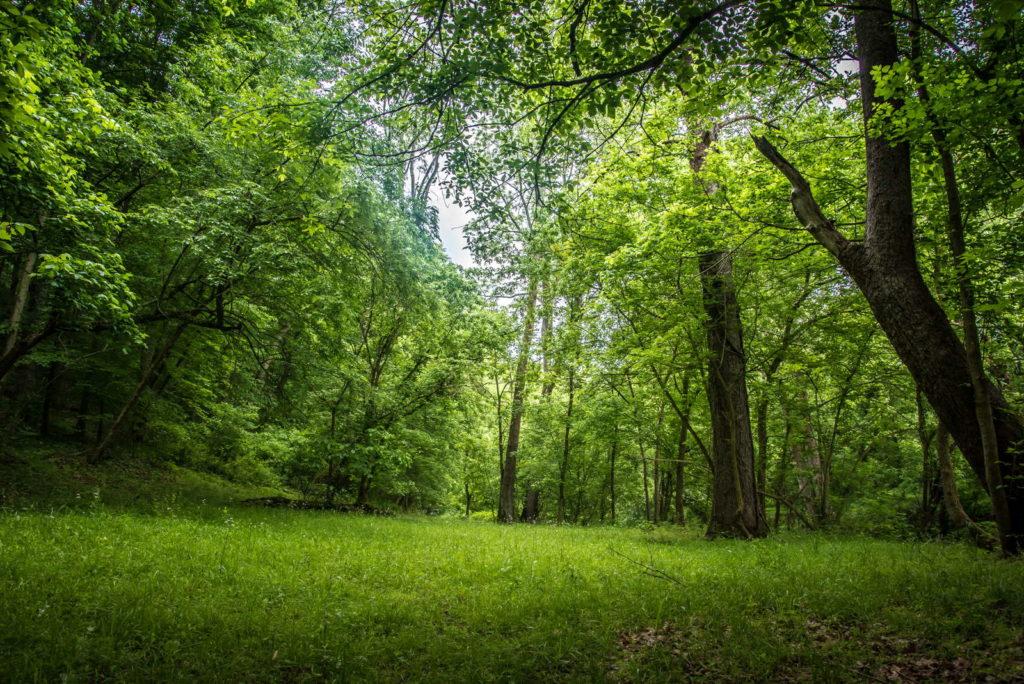 Wiese im Wald