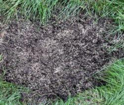 Einzelne Kahlstellen Nachsäen Rasen