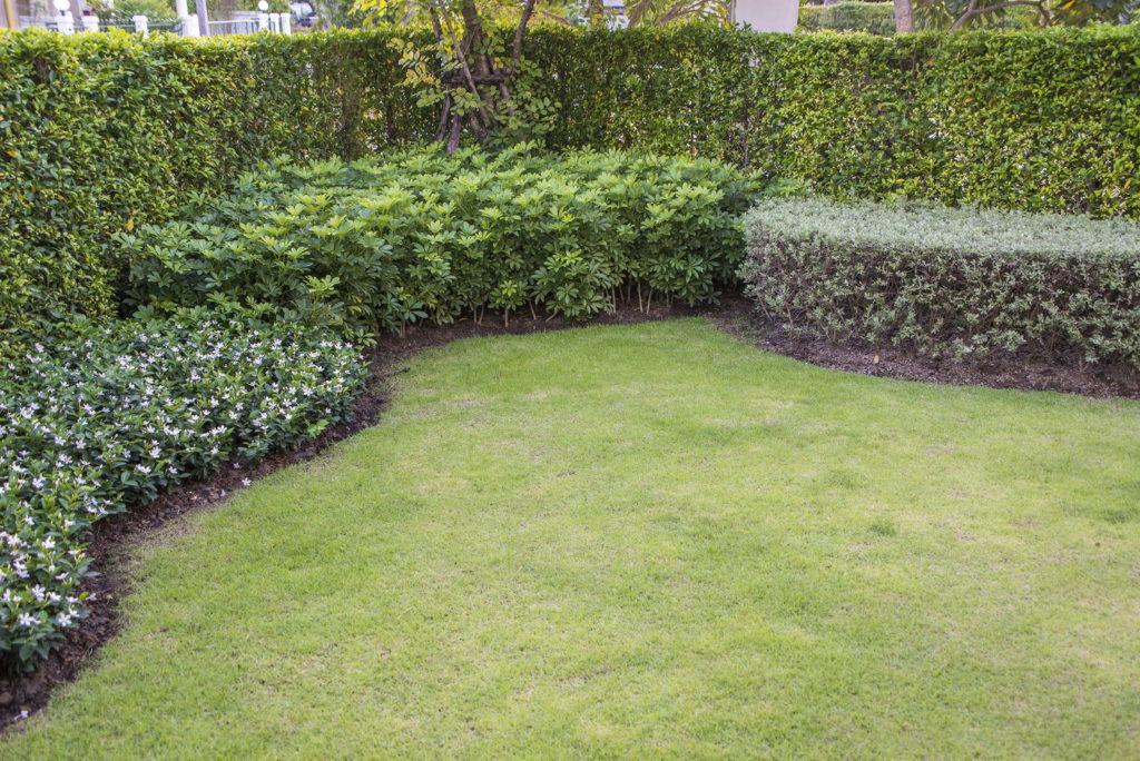 Rollrasen in Garten verlegt