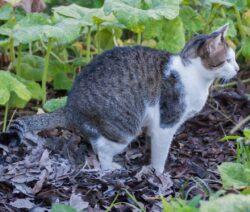 G1-Katze Macht In Den Garten