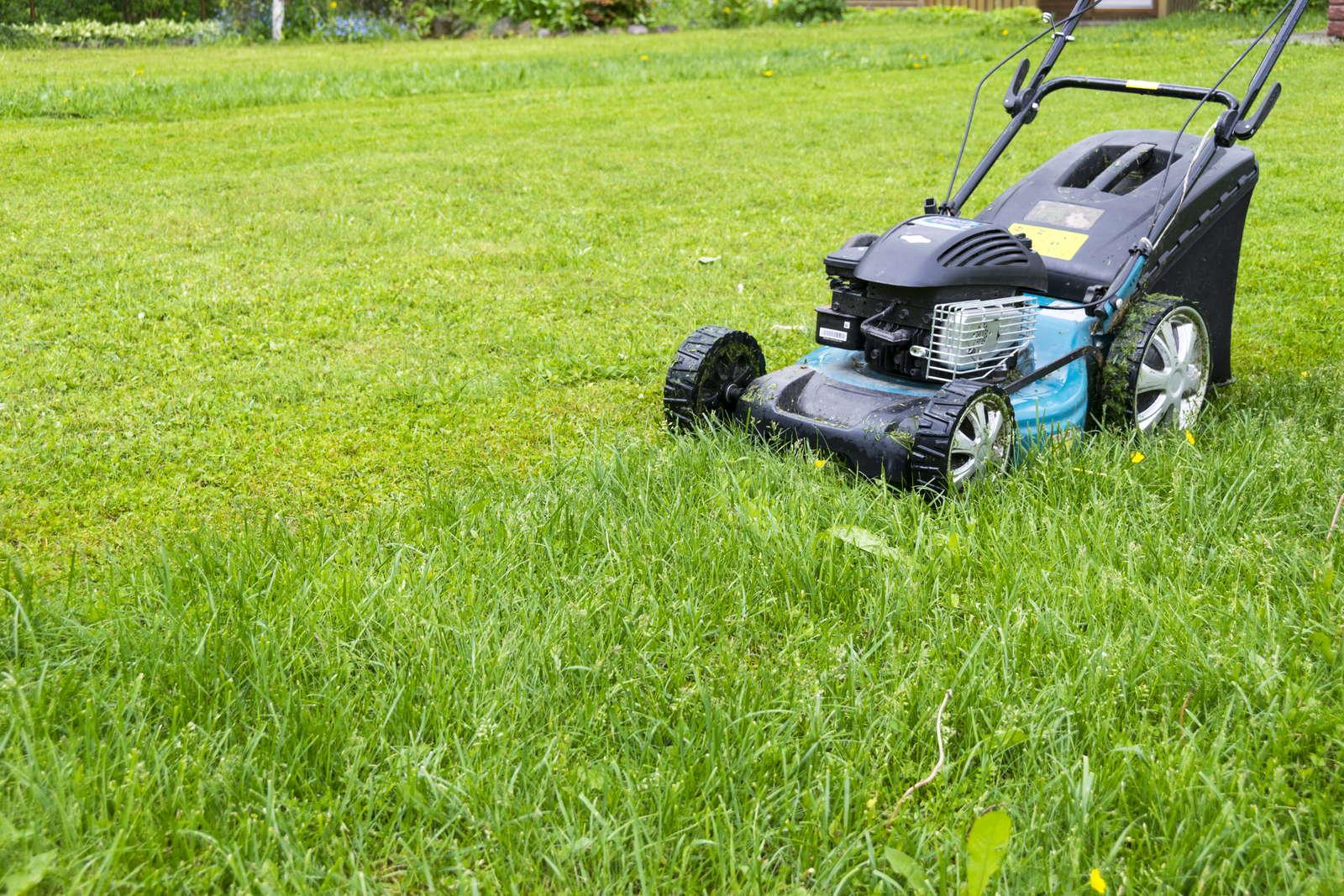 Rasen Mahen Oder Rasen Mulchen Was Ist Besser Plantura