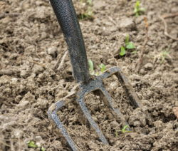 Erde Rasen Umgraben Mit Grabgabel