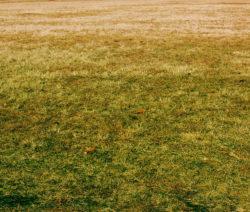 Gelblicher Rasen Rasen Düngen