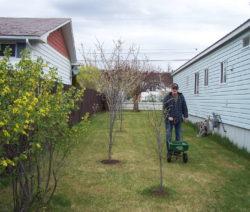 Mann Rasen Düngen Im Garten Bäume Haus