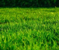 Schöner Rasen Grün