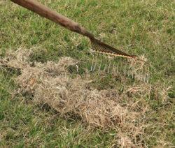 Rasen Moss Rechen