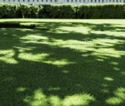 Schattiger Rasen Rasen Mulchen