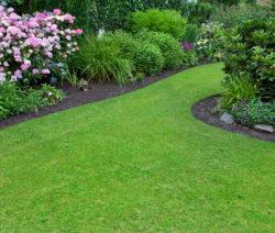 Zierrasen Garten Mit PFlanzen Bäumen Büschen Blumen