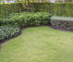 Fertig Angelegter Rasen Im Garten