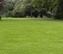 Großer Garten Gemähter Rasen Rasen Mulchen