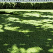 Schattiger Rasenstandort