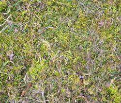 G12-Trockener Und Vermooster Rasen