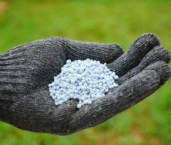 Blaukorn In Hand Dünger Rasen
