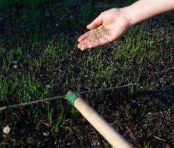 Einharken Von Samen Rasen Säen