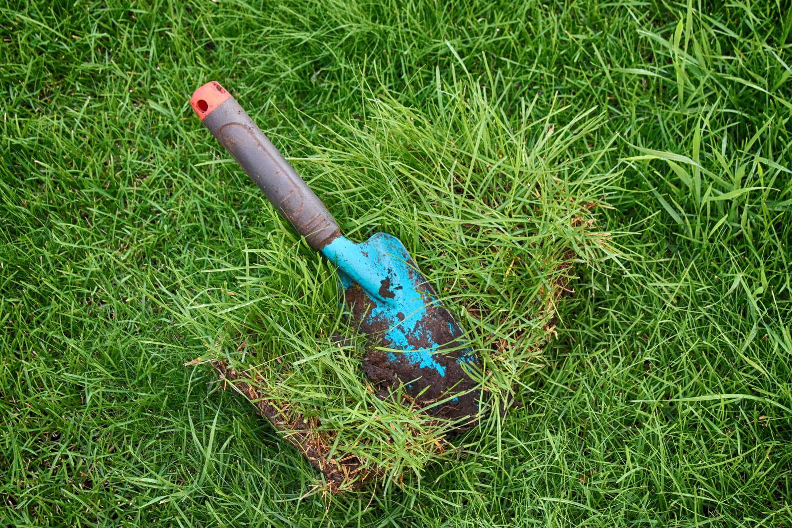 Rasen Ausbessern Reparieren Alternativen Zum Rasenerneuern Plantura