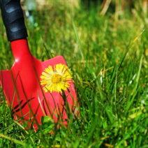 unkraut im rasen unkrautvernichter amp alternativen plantura