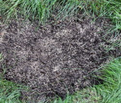 G19-Löcher Im Rasen Nachsäen