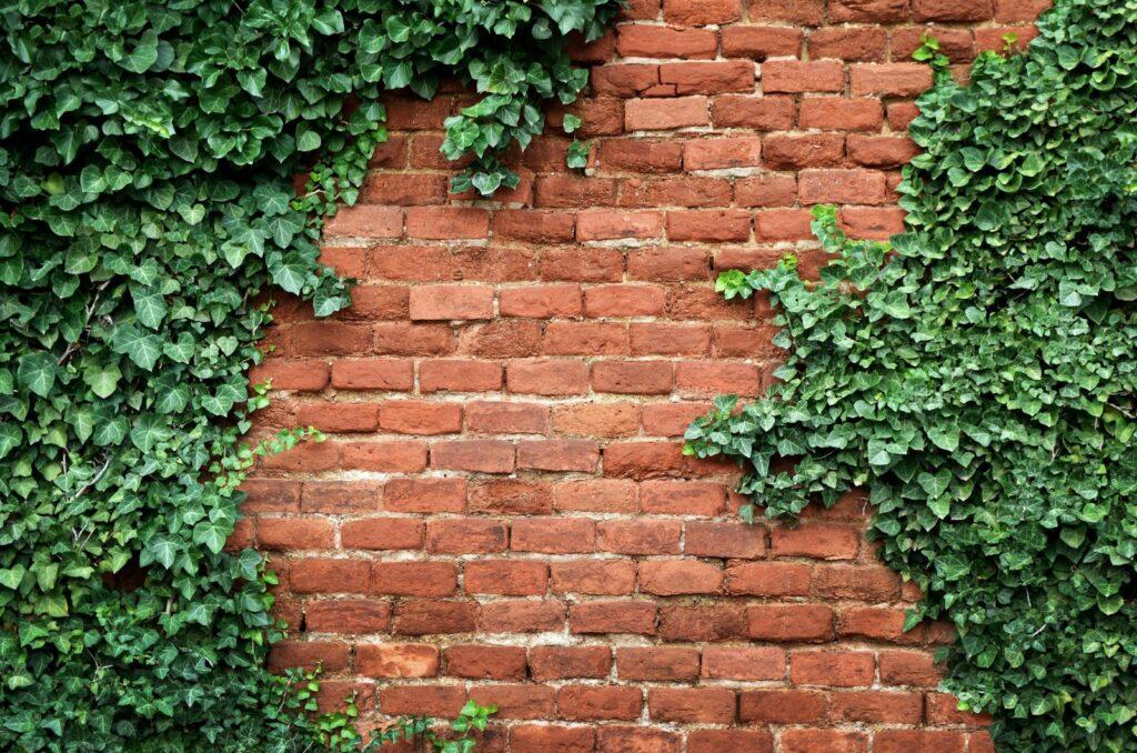 Immergrüne Kletterpflanzen: Unsere Top 7 Für Den Idealen
