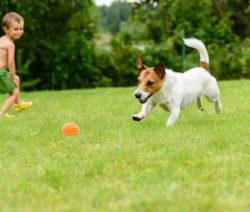 G21-Kind Und Hund Vorsicht Künstliche Dünger