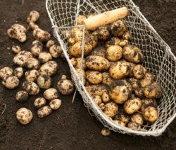 G3-Kartoffeln Im Korb