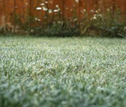 G3-Wiese Bei Frost
