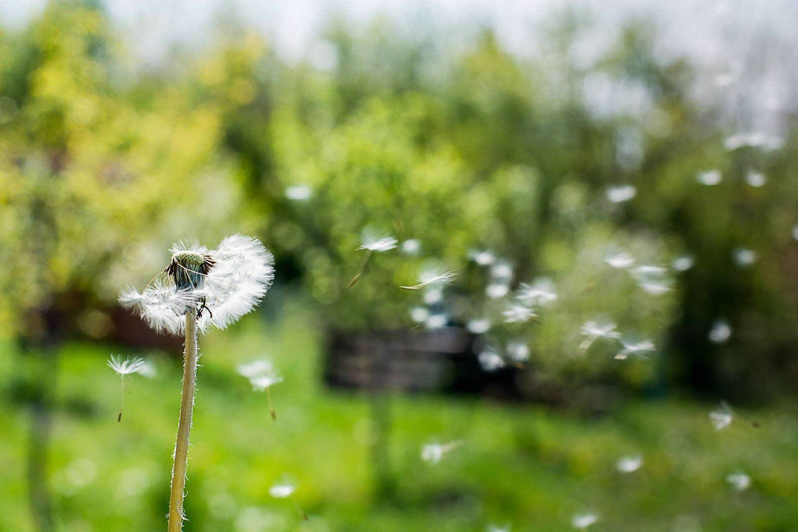 Unkraut Im Rasen Unkrautvernichter Alternativen Plantura