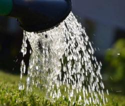 Bewässern Des Jungen Rasens Gießkanne
