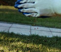 Rasen Düngen Handschuhe Herbstrasendüngung