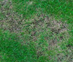 G5-Lückenhafter Rasen