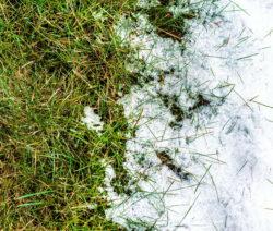 Rasen Winter Schnee Düngen