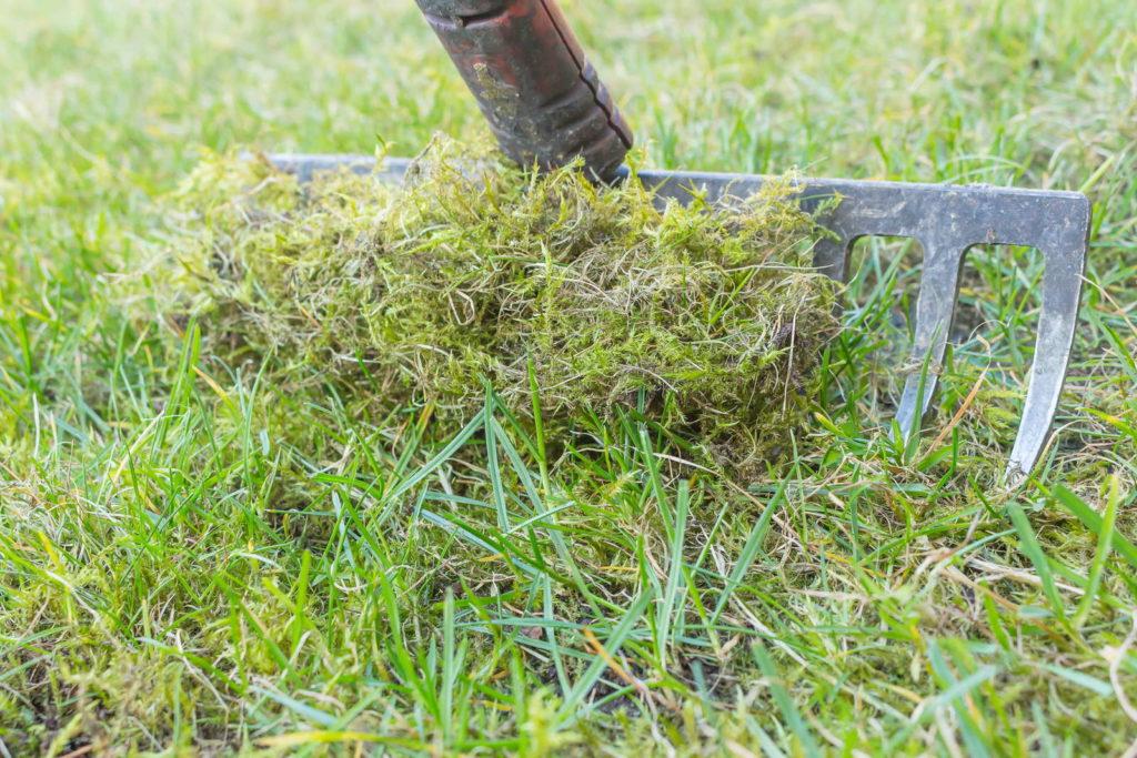 Moos aus Rasen rechen