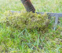 Moos Ausrechen Rasen