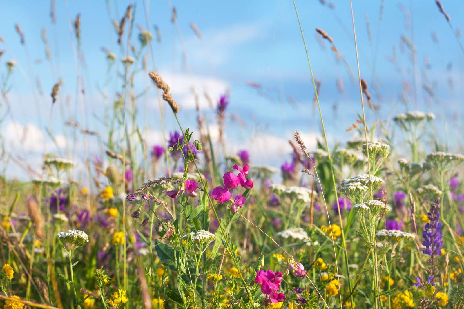Rasen Mahen Tipps Tricks Rund Ums Rasenmahen Plantura