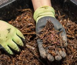 Komposterde Kompost In Hand Mit Handschuhen