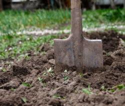 Schwerer Boden Erde Mit Schaufel Rasen