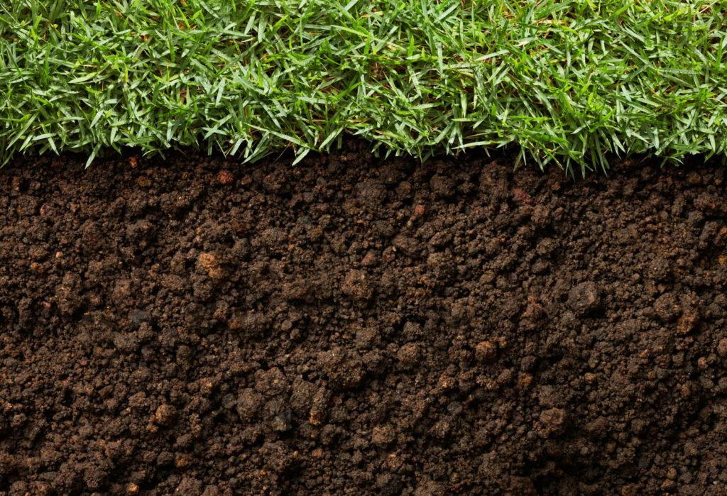 Humusreiche Erde mit Rasen