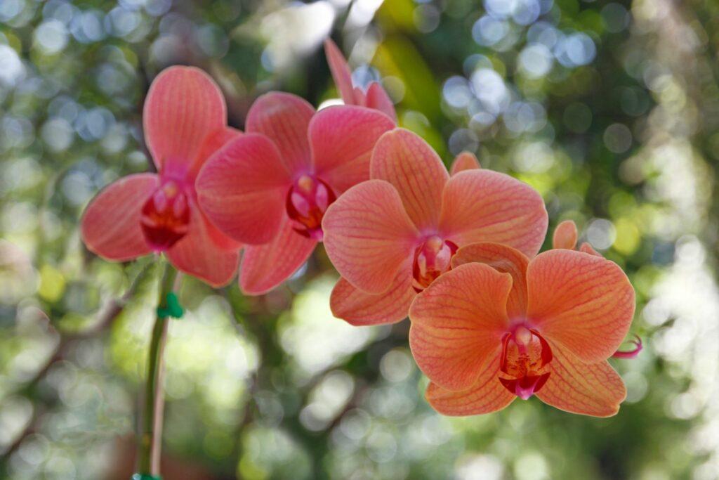Blüten der Orchidee